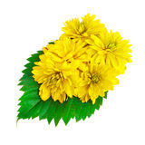 Yellow color flowers with green leafs Stock Photography