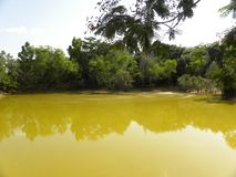Yellow color lake in forest with reflection of trees. Lake with yellow color water with green trees, leaves, wild plants and water with reflection of trees on stock photos
