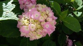 yellow Colore rosa bianco quanti colori Immagine Stock Libera da Diritti