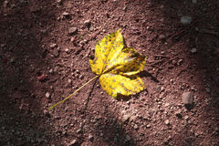 Yellow colored autumn leaf on floor Royalty Free Stock Image