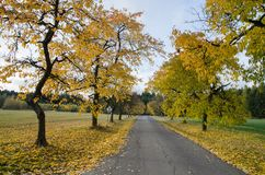 Yellow colored autumnal alley with tarmac road royalty free stock photography