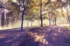 Yellow colored trees and purpule shade in a park alley stock images
