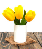 Yellow colored tulip flowers Royalty Free Stock Photography