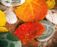 Yellow and colorful fallen down leaves Stock Images
