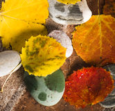 Yellow and colorful fallen down leaves Royalty Free Stock Image