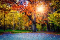 Yellow colors in autumn park. Landscape of colorful trees in central park. Scenery autumn at sunset. sun rays through branches. Yellow colors in autumn park royalty free stock photo