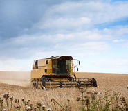 Yellow Combine Harvester. Harvesting corn in summertime England Stock Photos