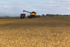 Yellow combine harvester on a wheat field with blue sky Stock Photo