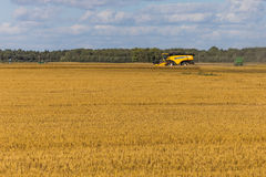 Yellow combine harvester on a wheat field with blue sky Royalty Free Stock Image