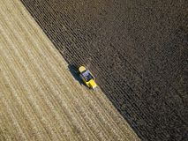 Yellow combine harvesting on the corn field Stock Photo