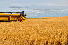 Yellow Combine in a Wheat Field. Yellow combine sits in a wheat field near Mannville, Alberta, ready for the fall harvest Stock Image
