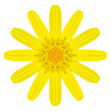 Yellow Concentric Daisy Flower Isolated on White. Mandala Design. Yellow Concentric Daisy Flower Isolated on White Background. Kaleidoscopic Mandala Design royalty free stock photos