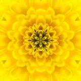 Yellow Concentric Flower Center. Mandala Kaleidoscopic design Stock Image