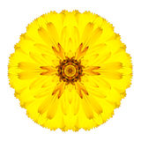 Yellow Concentric Gerbera Flower Isolated on White. Mandala Design. Yellow Concentric Gerbera Flower Isolated on White Background. Kaleidoscopic Mandala Design royalty free stock photos