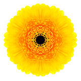 Yellow Concentric Gerbera Flower Isolated on White. Mandala Design. Yellow Concentric Gerbera Flower Isolated on White Background. Kaleidoscopic Mandala Design Stock Photography