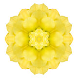 Yellow Concentric Rose Flower Isolated on White. Mandala Design Stock Photos