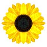 Yellow Concentric Sunflower Mandala Flower Isolated on White. Yellow Concentric Sunflower Flower Isolated on White Background. Kaleidoscopic Mandala Design Royalty Free Stock Photos