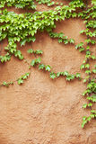 Yellow concrete wall with plant Stock Photography