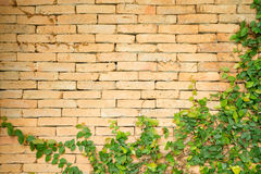 Yellow concrete wall with plant Stock Photo