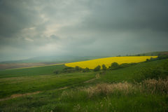 Yellow cone field. Yellow cone-shaped field under the low cloudy sky and misting royalty free stock photos
