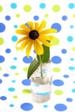 Yellow coneflower. Yellow coneflower in vase with background of blue and green dots Stock Photos
