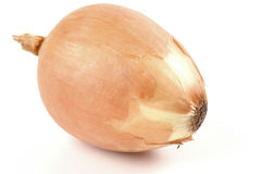 Free Yellow Cooking Onion Stock Images - 2577234