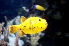 Yellow coral fish Stock Photo