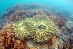 Great Barrier Reef Australia Stock Photos