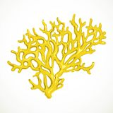 Yellow corals sea life small object Royalty Free Stock Photos