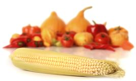 Yellow corn Royalty Free Stock Image