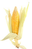 Yellow Corn Stock Photography