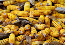 Yellow Corn Royalty Free Stock Photos