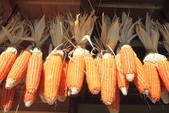 Yellow corn. Closeup some yellow corns   in  Yamanashi, Kantou ,japan Royalty Free Stock Photography