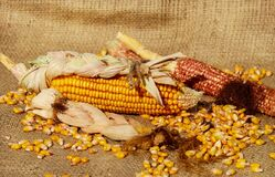 Yellow Corn Royalty Free Stock Photography