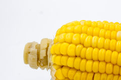 Yellow corn abstract  background Stock Photography