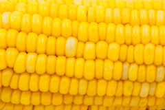 Yellow corn abstract  background Stock Images