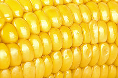 A yellow corn background, macro Stock Images