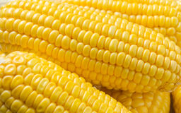 Yellow corn background Stock Photography