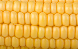 Yellow corn cob close-up. Background Stock Image