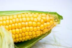 Yellow Corn Cob Closeup, Macro Shot. Shallow DOF, Selective Focus Royalty Free Stock Photos