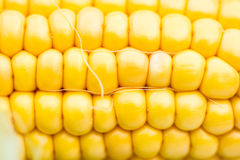 Yellow Corn Cob Closeup, Macro Shot. Shallow DOF, Selective Focus Stock Photography