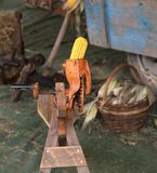 yellow corn cob in an old machine to remove the seeds Royalty Free Stock Image