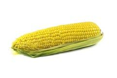 Yellow corn cob  over white Stock Image