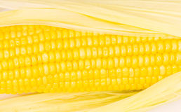 Yellow corn cobs Royalty Free Stock Photo