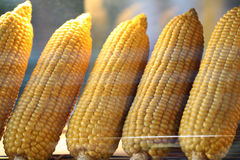 Yellow corn drying in the local food. Royalty Free Stock Photos