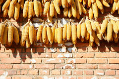 Yellow corn drying on an orange wall in China. Royalty Free Stock Image