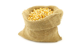 Yellow corn grain in a burlap bag Stock Photos