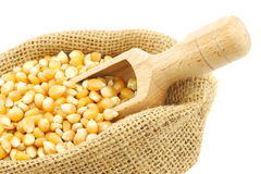 Yellow corn grain in a burlap bag Royalty Free Stock Photo