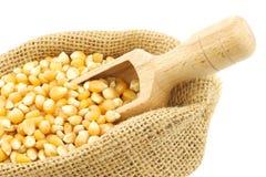 Yellow corn grain in a burlap bag Royalty Free Stock Photo