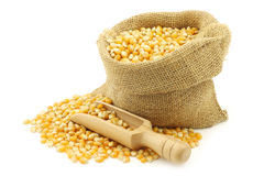 Yellow corn grain in a burlap bag Stock Image